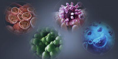 SIDA, bacterie, boli contagioase, boli infectioase, ciuperca, colli, colonie, consultatie, diaree, epidemie, hepatita, imunodeficienta, meningita, meningoencefalita, oreion, pandemie, paraziti, pneumonie, pojar, virus, vaccin