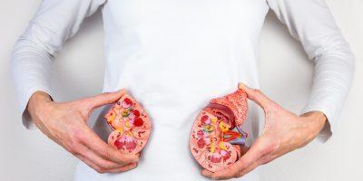 nefrologie, nefrolog, rinichi, urina, insuficienta renala, dializa, functie renala, uremie, transplant renal, filtrare glomerulara,